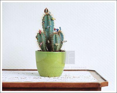 Cactus2009 color web