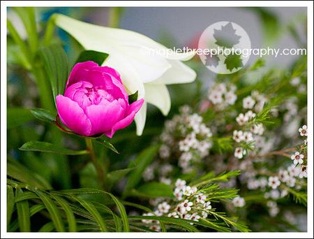 _mg_0725_crop_color_web